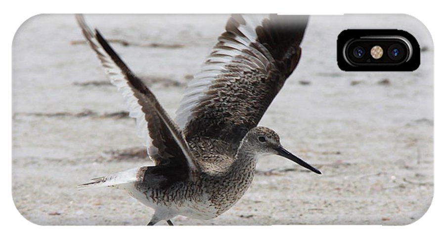 Willet IPhone X Case featuring the photograph Willet Take-off by Barbara Bowen