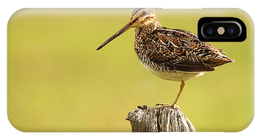 Snipe IPhone X Case featuring the photograph Wilson's Snipe On Morning Perch by Max Allen
