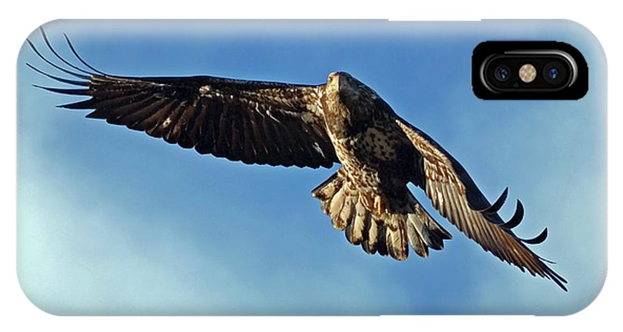 Bald Eagle IPhone X Case featuring the photograph Wind Beneath My Wings by Randall Ingalls