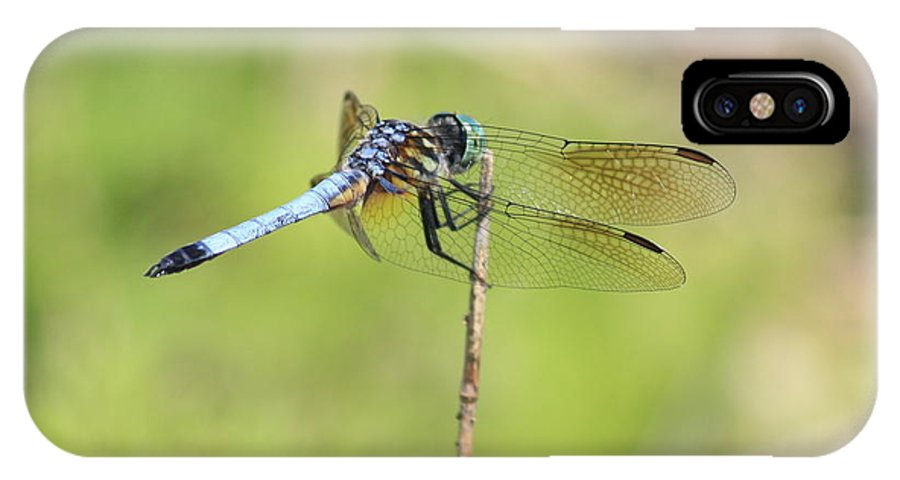Dragonfly IPhone X Case featuring the photograph Windswept Dragonfly by Carol Groenen