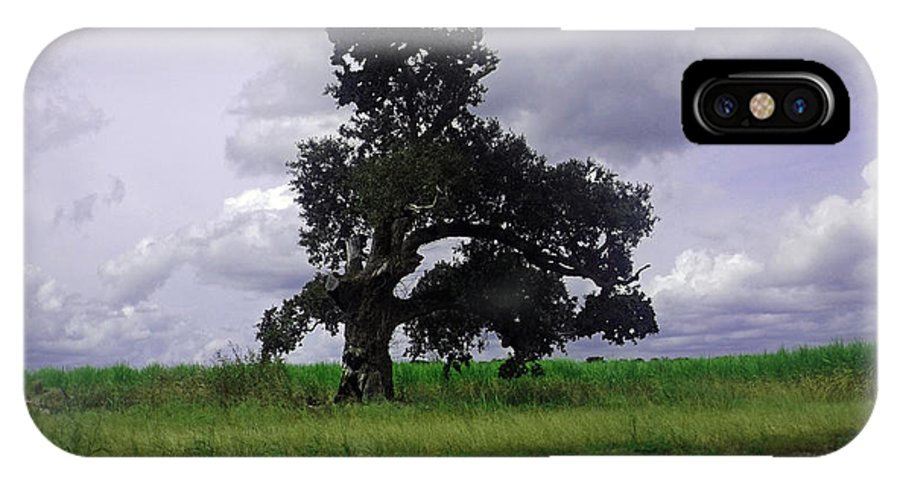 Louisiana IPhone X Case featuring the photograph Windswept Tree by Leigh Ann Raab