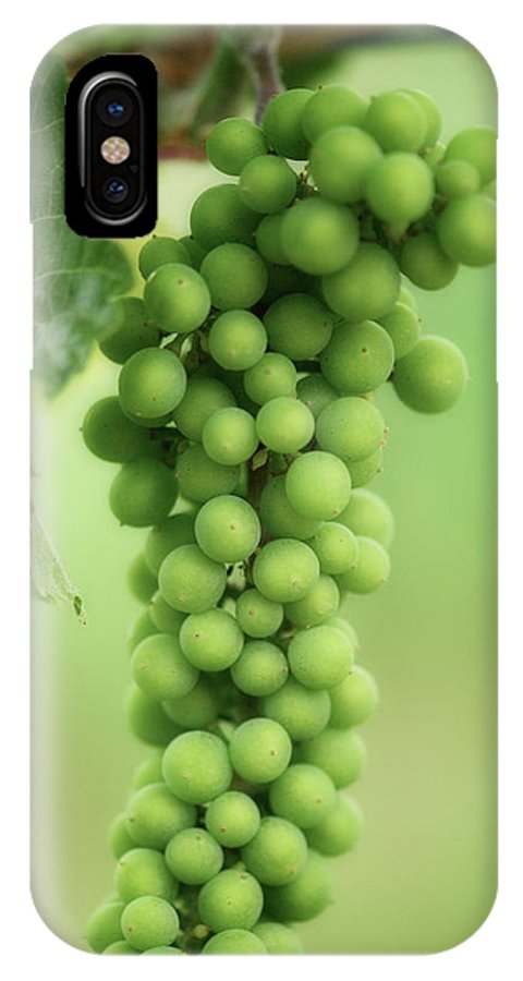 Wine IPhone X Case featuring the photograph Wine Before Picture by Lisa Knechtel