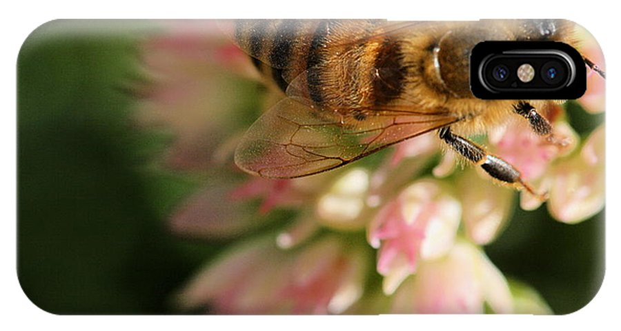 Bee IPhone X Case featuring the photograph Wing And A Prayer by Angela Rath