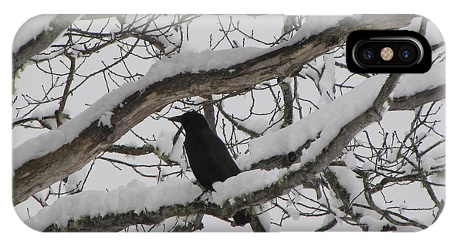 Crow IPhone Case featuring the photograph Winter Crow by Melissa Parks