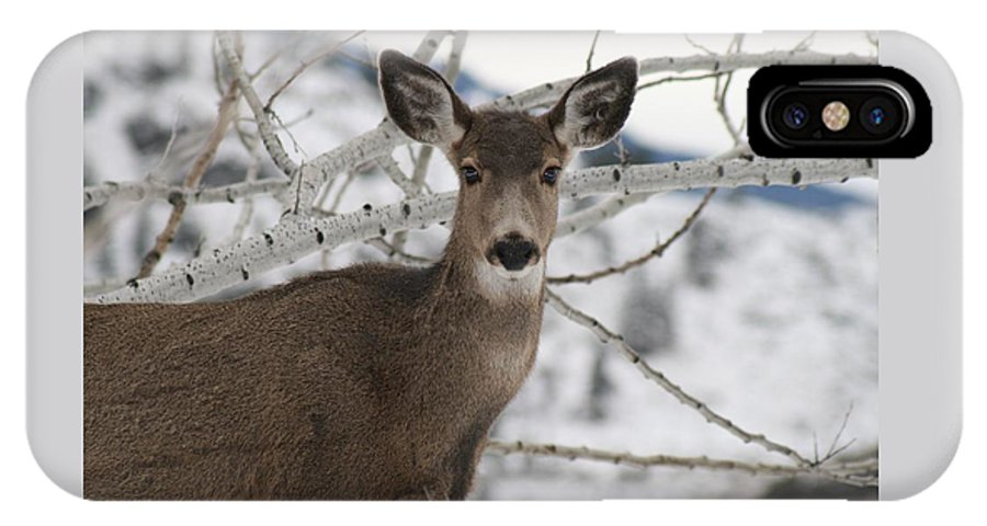White Tail Deer IPhone Case featuring the photograph Winter Doe Of The Okanagan by Tiffany Vest