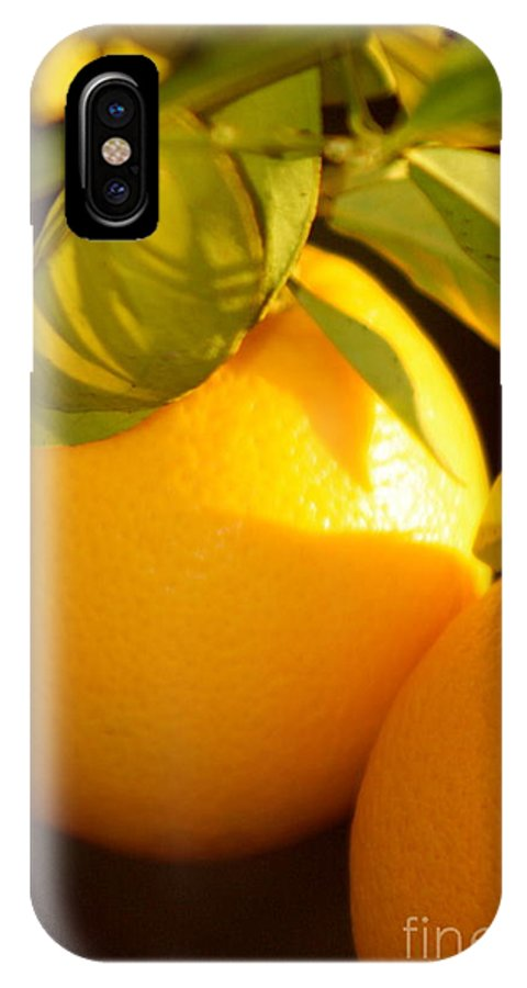 Fruit IPhone Case featuring the photograph Winter Fruit by Nadine Rippelmeyer