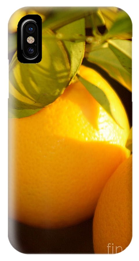 Fruit IPhone X Case featuring the photograph Winter Fruit by Nadine Rippelmeyer