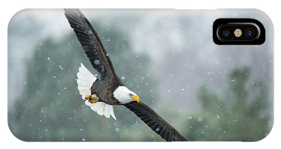 Bald Eagle IPhone X Case featuring the photograph Winter Hunter by Mike Dawson