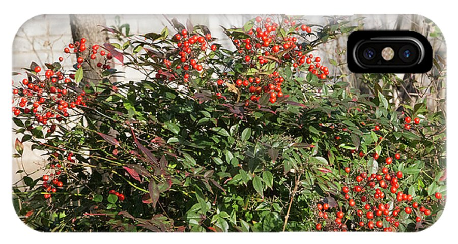 Plant IPhone X Case featuring the photograph Winter Red Berries by Linda Phelps