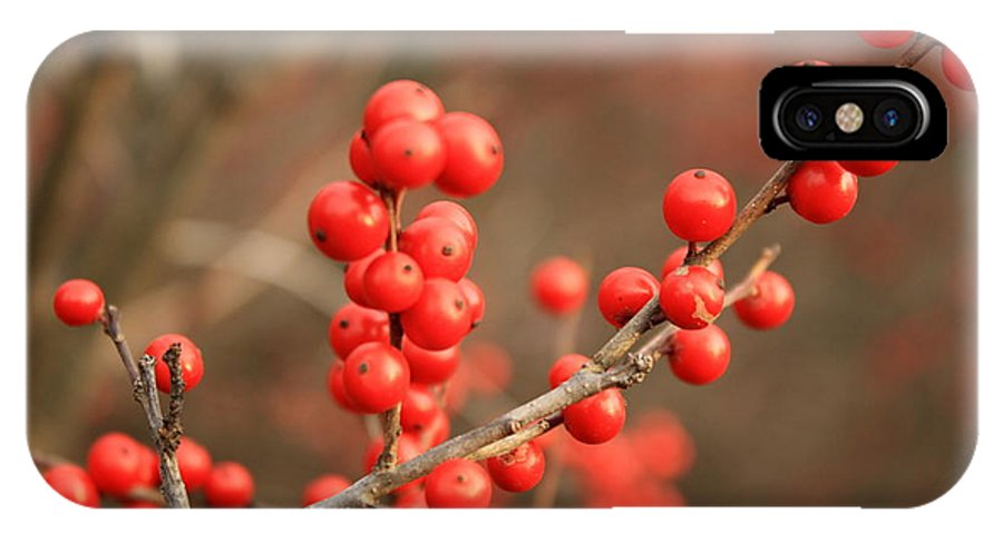 Winterberries IPhone X Case featuring the photograph Winterberries On Brown by Heather Newkirk