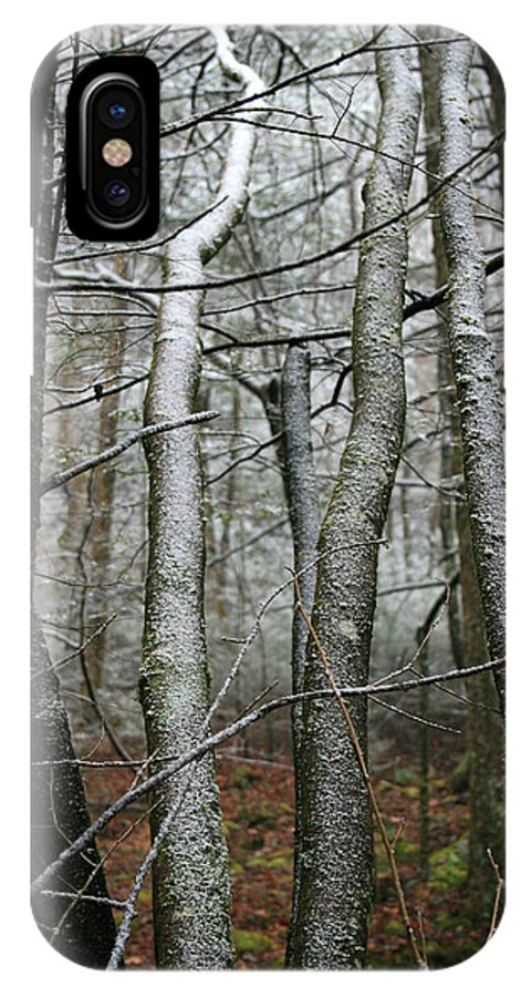 Tree Woods Forest Wood Snow White Green Winter Season Nature Cold IPhone X Case featuring the photograph Wintery Day by Andrei Shliakhau
