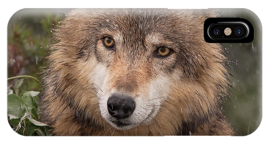 Wolf IPhone X Case featuring the photograph Wolf Face by Jerry Fornarotto