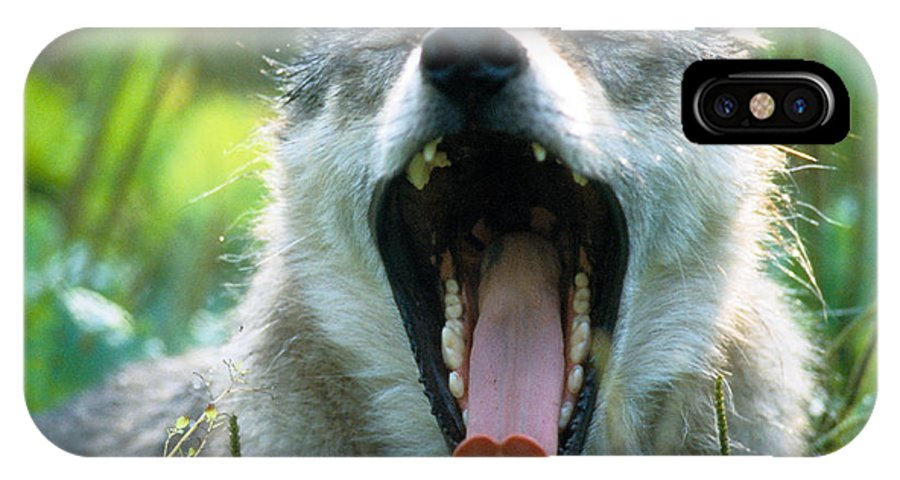 Wolf IPhone Case featuring the photograph Wolf Yawn by Steve Somerville