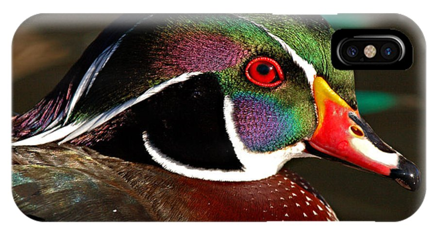 Wood Duck IPhone X Case featuring the photograph Wood Duck Courtship Colors by Max Allen