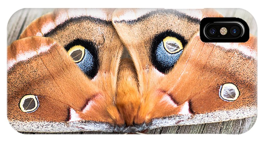 Moth IPhone X Case featuring the photograph Woodland Moth by Sherman Perry