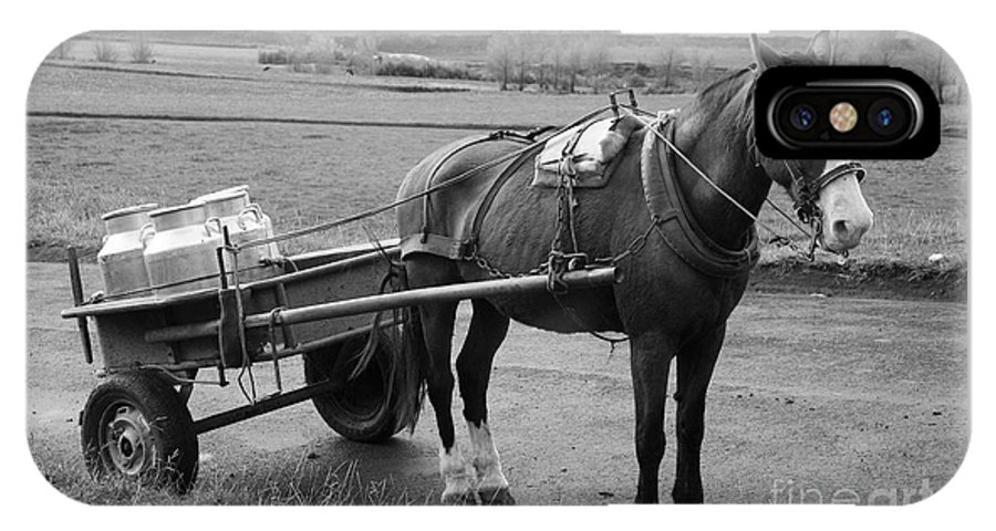 Cart IPhone Case featuring the photograph Work Horse And Cart by Gaspar Avila