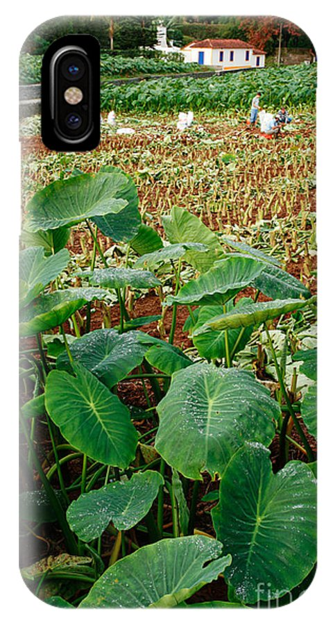 Agriculture IPhone X Case featuring the photograph Yams Farm In Azores by Gaspar Avila