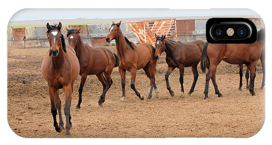 Photography IPhone X Case featuring the drawing Yearlings In Single File by Cheryl Poland