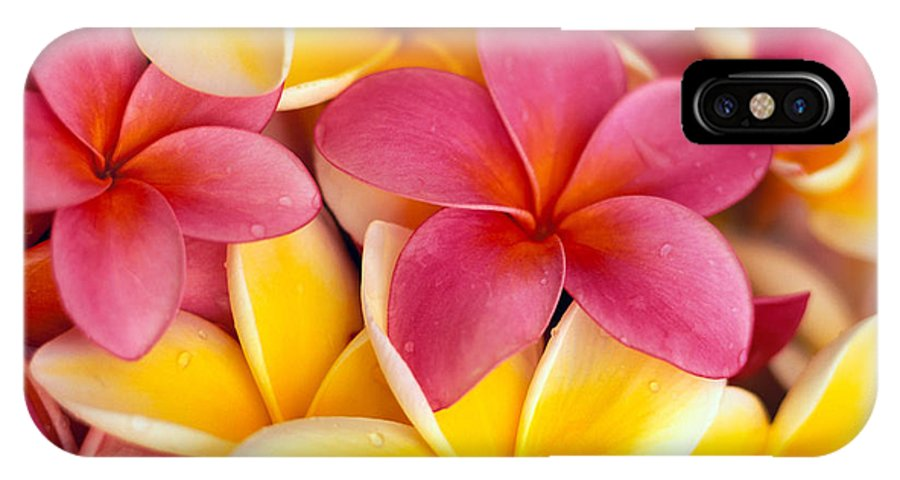 Aloha IPhone X Case featuring the photograph Yellow And Pink by Dana Edmunds - Printscapes