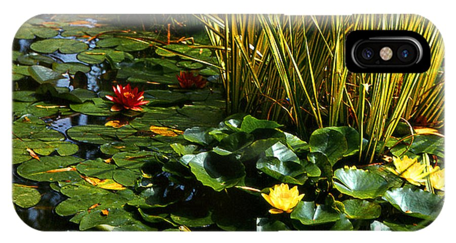 Lilies IPhone X Case featuring the photograph Yellow And Red Water Lilies In A Pond by Alexandra Cook