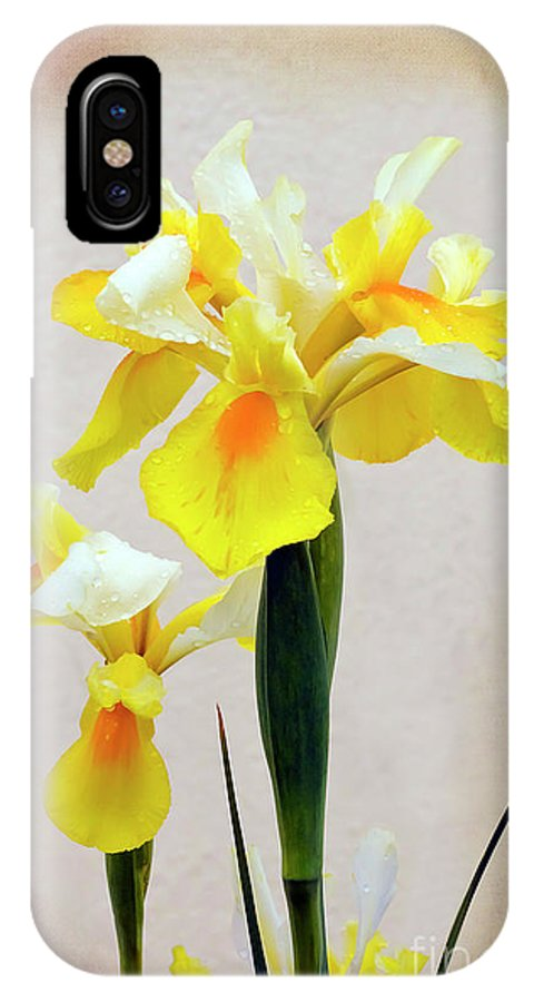 Flower IPhone X Case featuring the photograph Yellow And White Iris Textured by Terri Waters