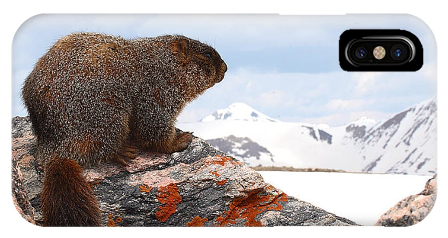 Marmot IPhone Case featuring the photograph Yellow-bellied Marmot Enjoying The Mountain View by Max Allen
