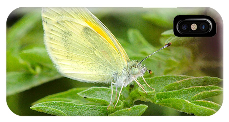 Yellow IPhone X Case featuring the photograph Yellow Butterfly by James Smullins