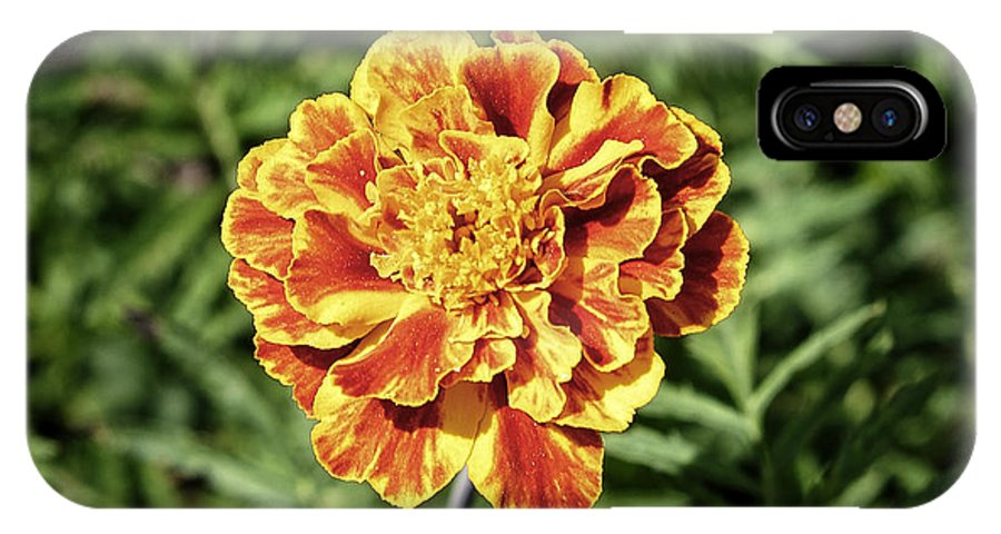 Background IPhone X Case featuring the photograph Yellow Carnation by Adrian Bud