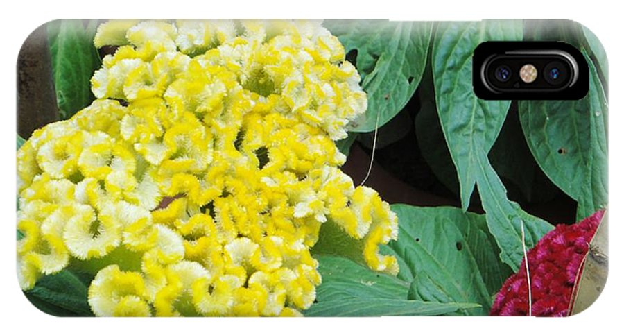 IPhone X Case featuring the photograph Yellow Cockscomb by Usha Shantharam