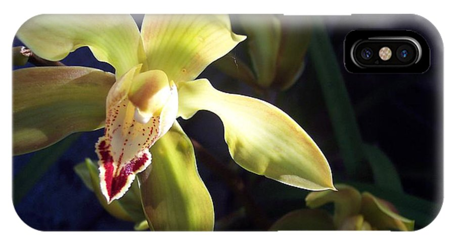 Yellow IPhone X Case featuring the photograph Yellow Cymbidium And Shadows by Jean Booth