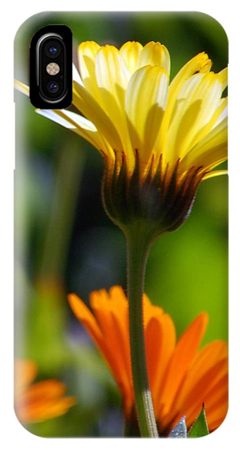 Daisy IPhone X Case featuring the photograph Yellow Daisy by Amy Fose