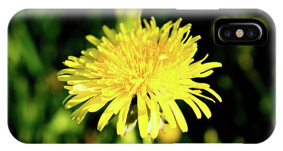 Olga Olay IPhone X Case featuring the photograph Yellow Dandelion Flower by Olga Olay