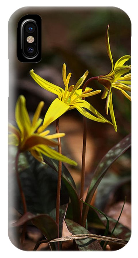 Yellow Dogtooth Violets IPhone X Case featuring the photograph Yellow Dogtooth Violets by Michael Dougherty