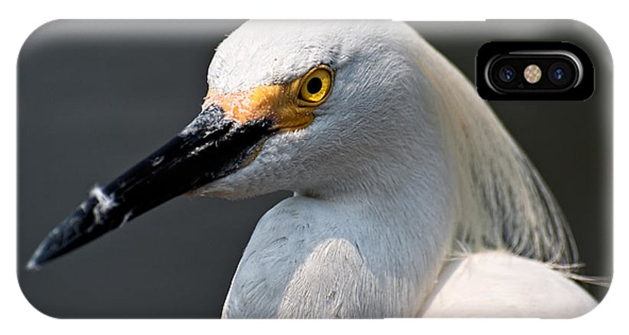 Snowy Egret IPhone X Case featuring the photograph Yellow Eye by Christopher Holmes
