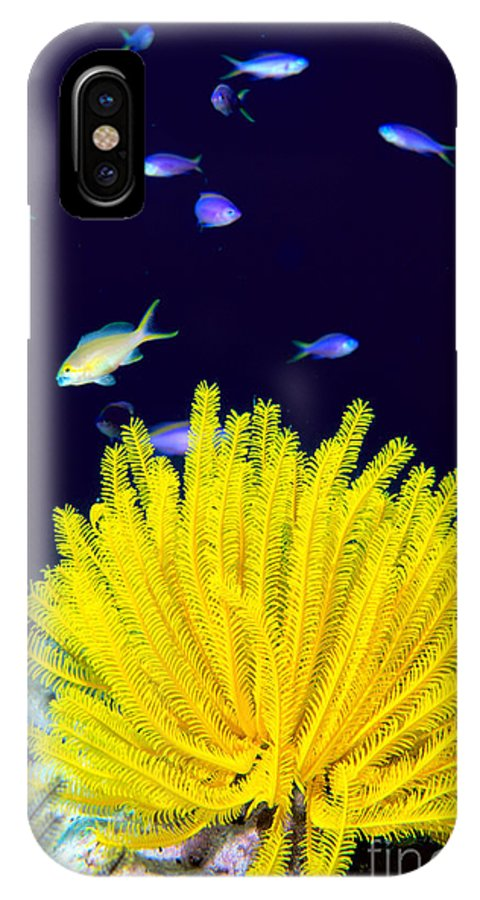 C1943 IPhone X Case featuring the photograph Yellow Feather Star by Ed Robinson - Printscapes