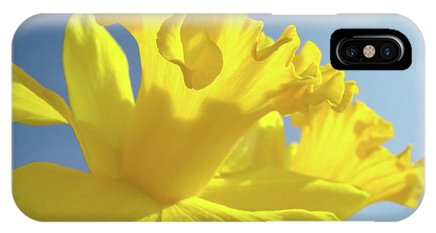 Flower IPhone X Case featuring the photograph Yellow Flower Floral Daffodils Art Prints Spring Blue Sky Baslee Troutman by Baslee Troutman