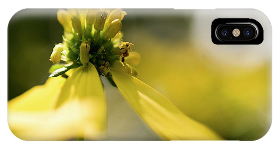 Yellow Flower IPhone X Case featuring the photograph Yellow Flower by Michelle Himes
