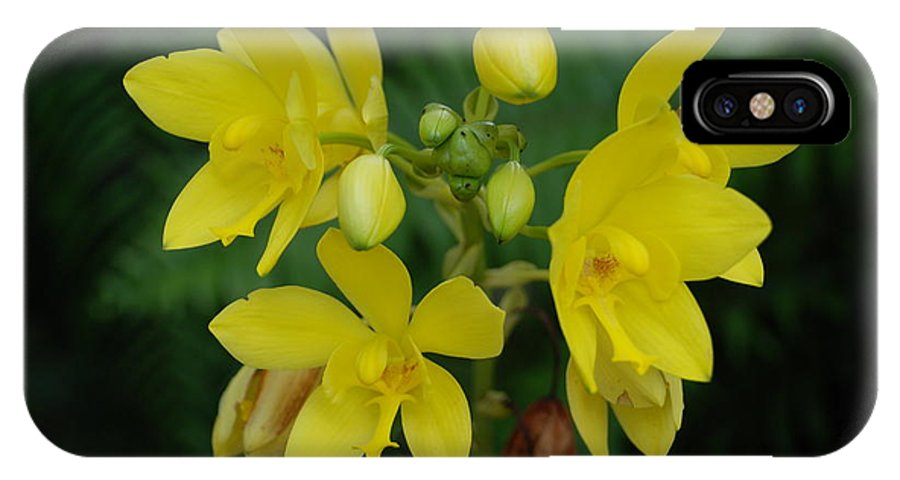 Macro IPhone X Case featuring the photograph Yellow Flower by Rob Hans