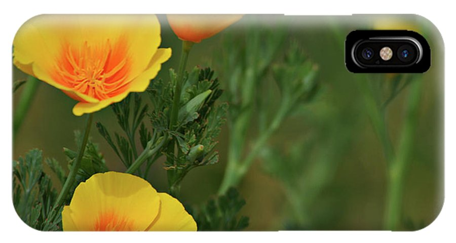 Yellow IPhone X Case featuring the photograph Yellow Flowers by Scott Sawyer