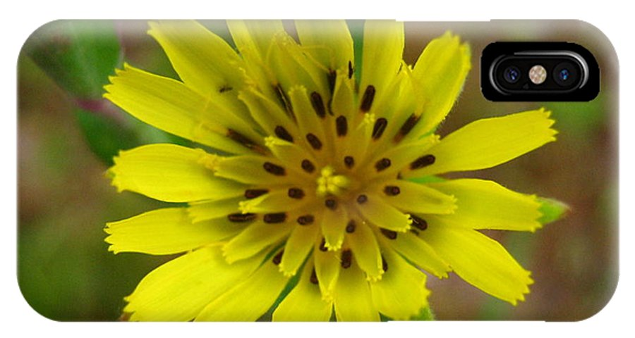 Flower IPhone Case featuring the photograph Yellow Goatsbeard by Melissa Parks
