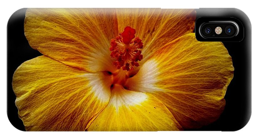 Flower IPhone X Case featuring the photograph Yellow Hi by Kathy Barney