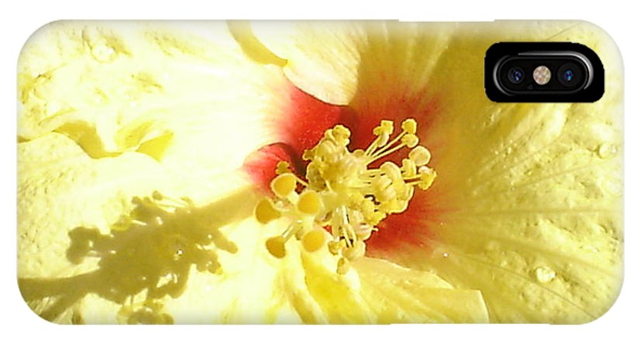 Yellow Hibiscus IPhone X / XS Case featuring the photograph Yellow Hibiscus Close Up by Chandelle Hazen