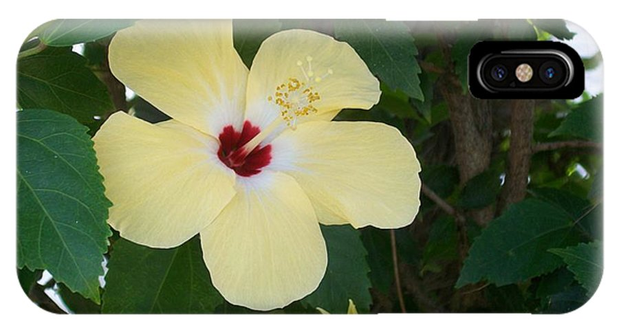 Yellow IPhone X Case featuring the photograph Yellow Hibiscus by Laurette Escobar