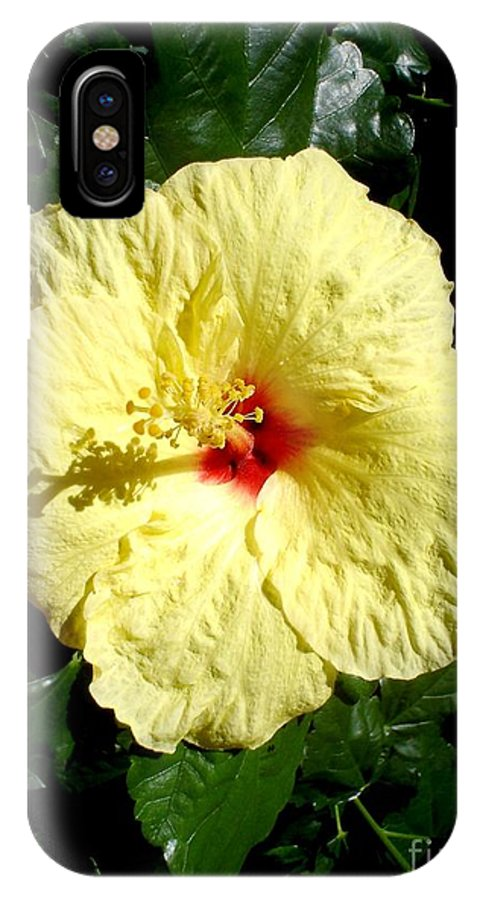 Flower IPhone X Case featuring the photograph Yellow Hibiscus The Hawaiian State Flower by Chandelle Hazen