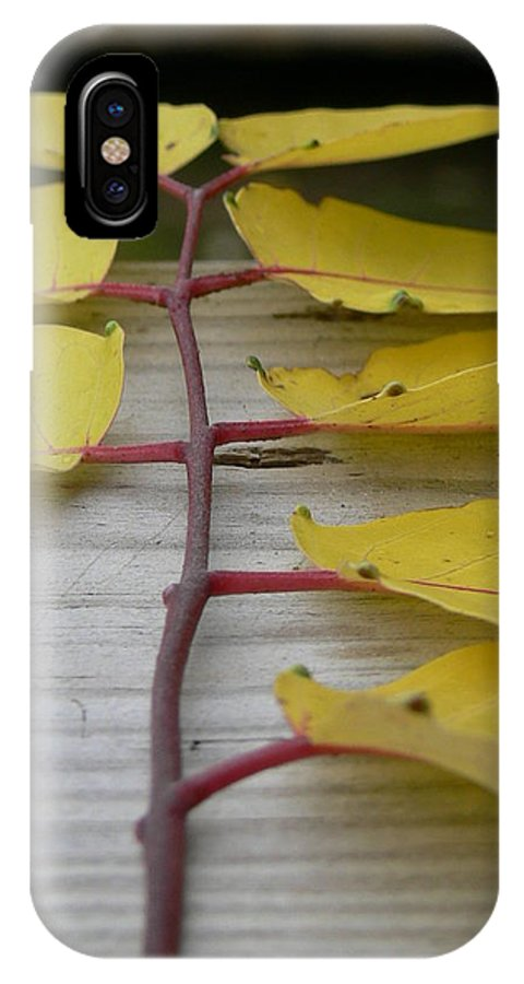 Yellow Leaves IPhone X Case featuring the photograph Yellow Ladder by Serina Wells