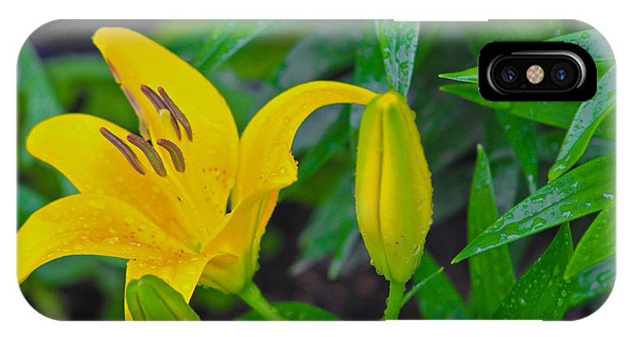 Nature IPhone X Case featuring the photograph Yellow Lilly by Melhem Gharazeddine