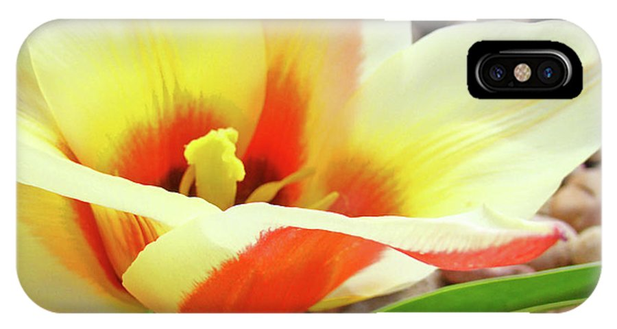 Tulip IPhone X Case featuring the photograph Yellow Orange Tulip Flower Art Print Baslee Troutman by Baslee Troutman