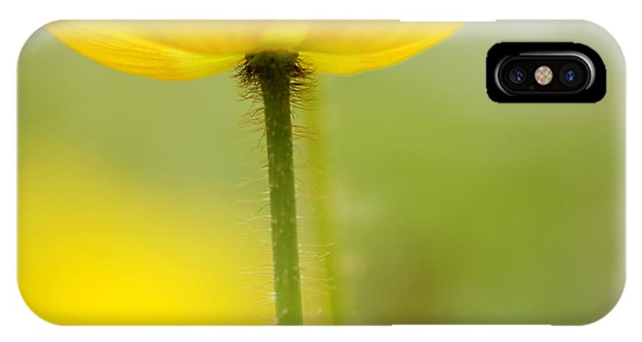 Poppy IPhone X Case featuring the photograph Yellow Poppy by Silke Magino