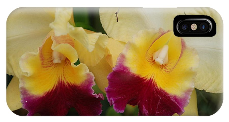 Macro IPhone X Case featuring the photograph Yellow Purple Orchids by Rob Hans