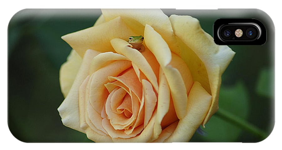 Rose IPhone X Case featuring the photograph Yellow Rose And Frog by Keith Lovejoy